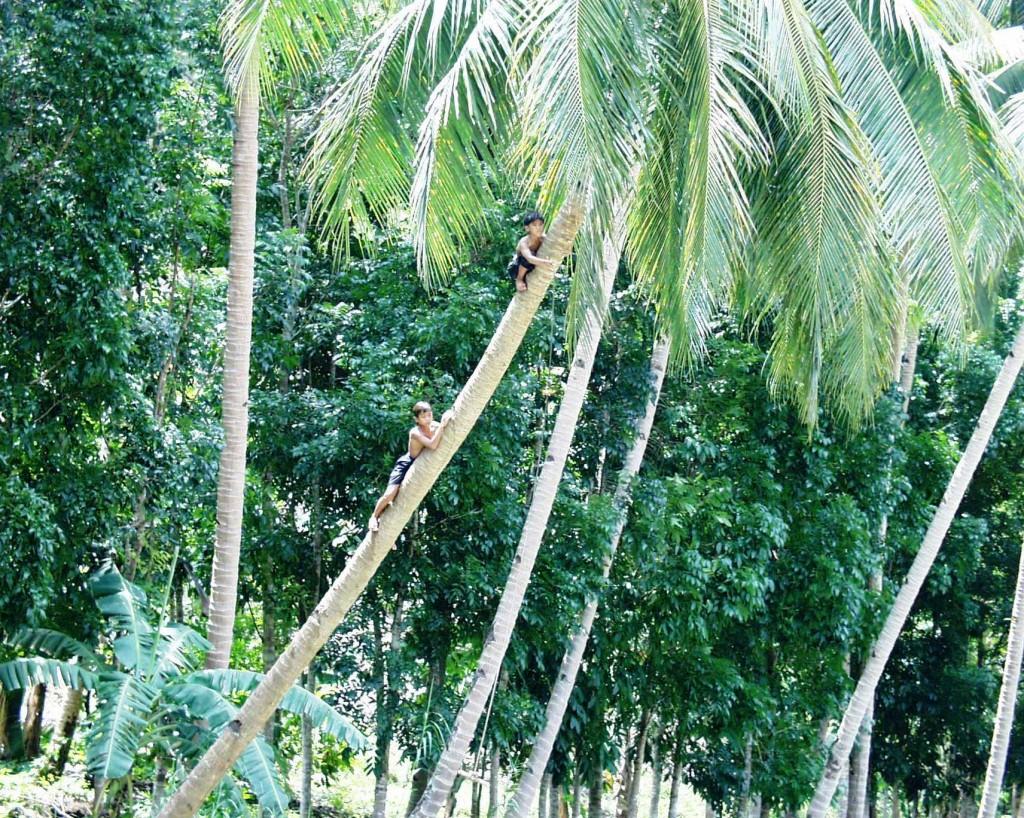 Diving Boys - Bohol Island