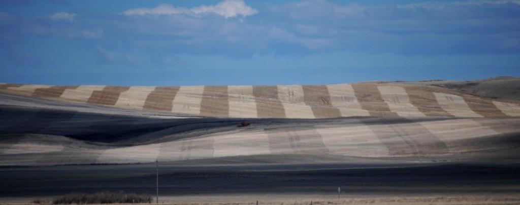 Striped fields in Northern Montana