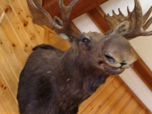 I love Moose...here's the one from Chriswell's