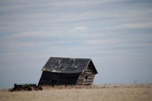 Wind Blown Cabin near Galata, MT