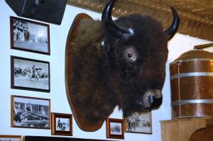 Mounted Buffalo at Armadillo Palace