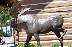 Moose! Yet another one for the collection. This one in Ketchum, Idaho