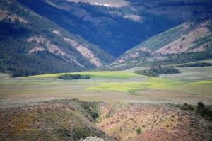 Flowery meadows west of Lava Springs, Idaho
