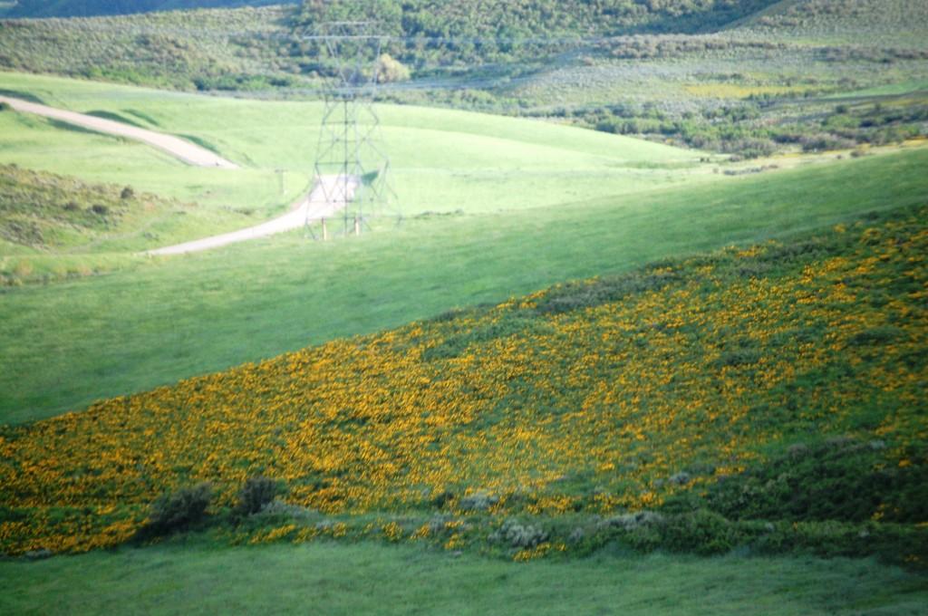 Flowery Meadows near Hayden, Colorado