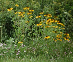 Wildflowers on I-79 south of Worth, PA