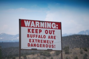Buffalo are dangerous - seen on CO Hwy 69 north of Gardner, Colorado