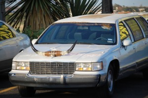 Longhorn ornamented stretch limos