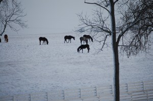 Winter scene in horse country