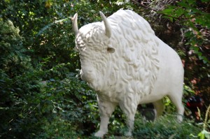 A White Buffalo Guards the Gate at Christman's Studio