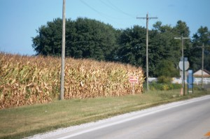 Corn Fields on Old Route 66 near Staunton, IL